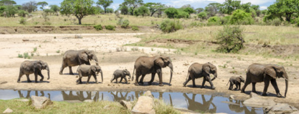 Top 5: Die besten Nationalparks in Afrika