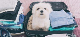 Auf Reise mit dem Hund – Tipps für den Urlaub mit Vierbeiner