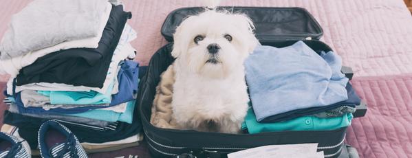 Hund sitzt in einem gepackten Urlaubskoffer