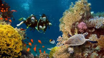 Zwei Taucher schwimmen durch ein Korallenriff mit bunten Fischen und einer Schildkröte