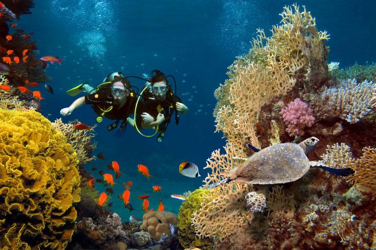 Zwei Tauchen schwimmen durch ein Korallenriff mit bunten Fischen und einer Schildkröte