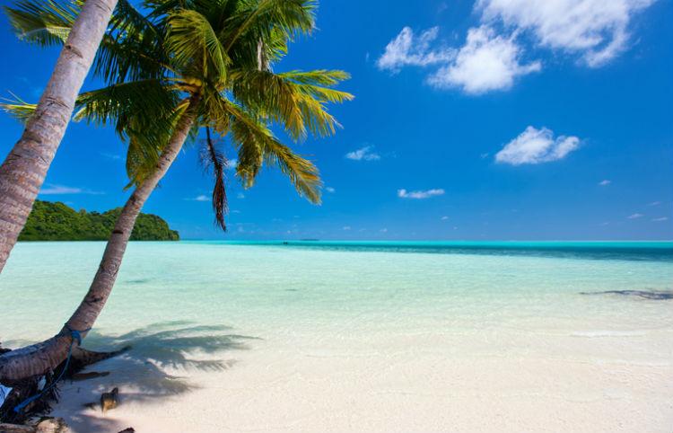 Besten Reiseziele für den Sommer 2018 am sonnigen Strand mit weitem Meer und schattiger Palme