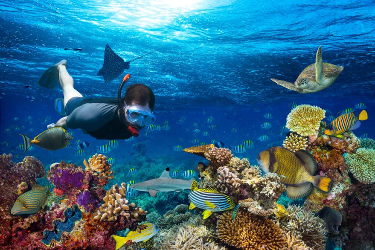 Person taucht im Riff