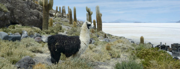 Reiseziel Bolivien – Den Binnenstaat Südamerikas entdecken