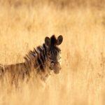 Südafrika entdecken - Reisetipps für Südafrika Rundreisen