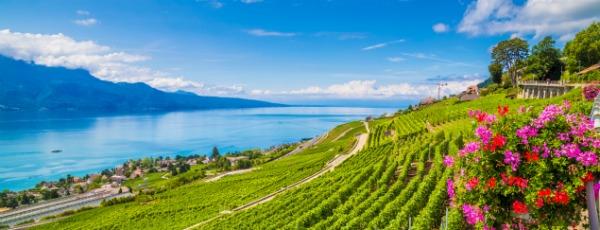 Spannende Weinreise durch Frankreich