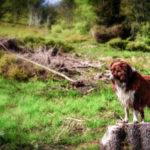 Urlaubsorte im Schwarzwald: Eine ideale Reisemöglichkeit für Hund und Herrchen