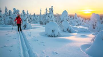 Eine Frau auf Langlauf-Skiern in der skandinavischen Winterlandschaft