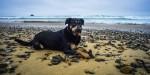 Tierisch guter Urlaub – Reisen mit Hund
