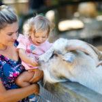 Das sind die 7 schönsten Zoos in Deutschland