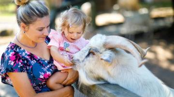 Mutter mit ihrer Tochter streicheln eine Ziege