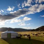 Mongolei Reisetipps - Ein unvergleichliches Abenteuer am Ende der Welt