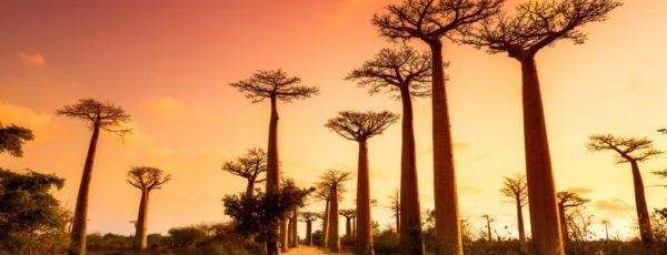 Madagaskar entdecken – Tipps für Weltenbummler