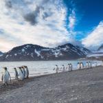 Falklandinseln Reise - Das abgelegene Archipel im Südatlantik entdecken