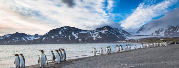 Falklandinseln Reise – Das abgelegene Archipel im Südatlantik entdecken