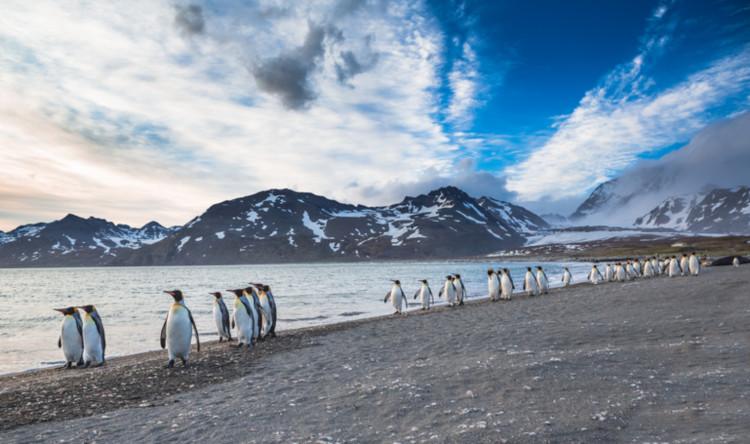Pinguine am Strand auf den Falklandinseln