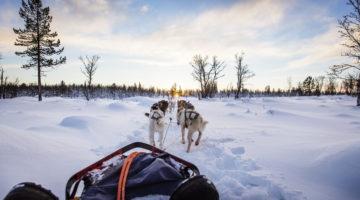 Hundeschlitten im Sonnenuntergang
