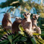 Madagaskar Reiseziele - Highlights im Land der Lemuren