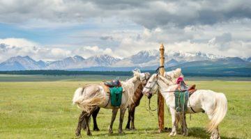 Mongolische Pferde in der Steppe