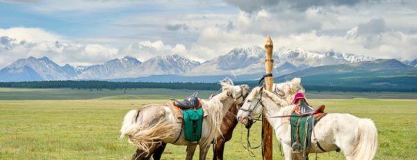 Mit dem Pferd durch die Mongolei – Meine aufregende Reise durch die Steppe