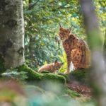 Bayerischer Wald: 5 fabelhafte Unternehmungen vorgestellt