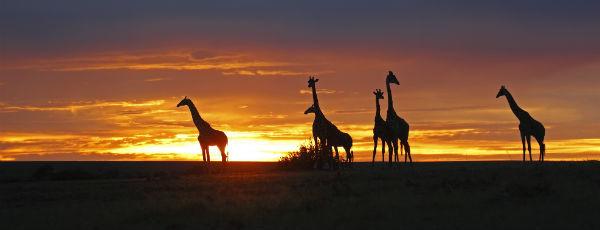 Reiseberichte Kenia – die Welt des Nomadenvolks der Massai