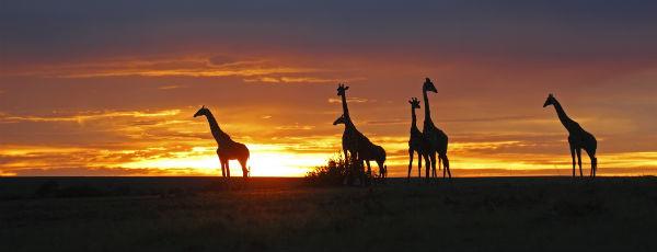Kenias wunderschöne Savanne