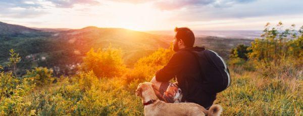 Verreisen mit Hund – beliebte Reiseziele & Tipps!