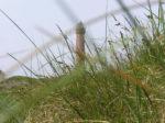 Sehenswürdigkeiten auf Norderney – was die Insel zu bieten hat