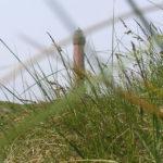 Sehenswürdigkeiten auf Norderney - was die Insel zu bieten hat