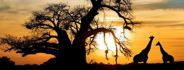 Safari in Südafrika: Rundreisen sind beliebter den je!