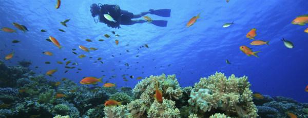 Wunderschöne Korallenriffe bei den Bermuda Inseln